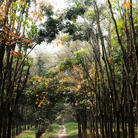 Road by Sugiarto Widodo - Landscapes Forests (  )