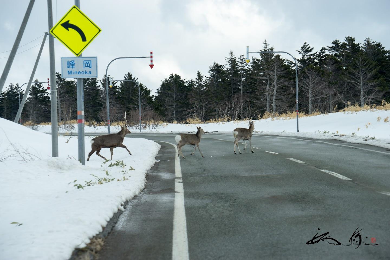 道路を渡る鹿ファミリー