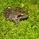 The agile frog (Ευκίνητος Βάτραχος)