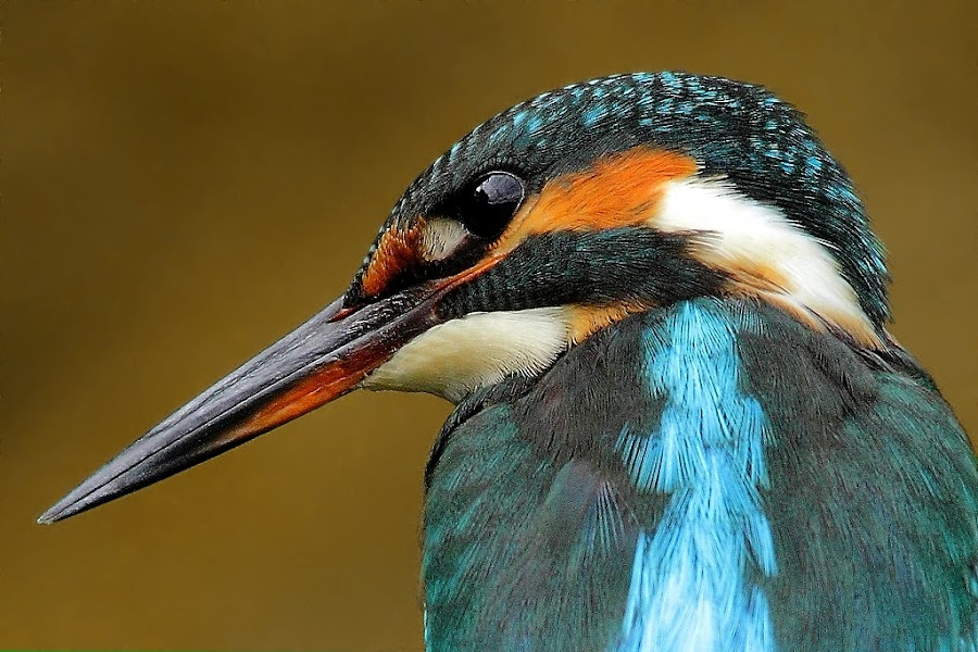 by Wise Photographie - Animals Birds