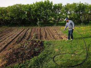 Photo: Watering the garden - June 1