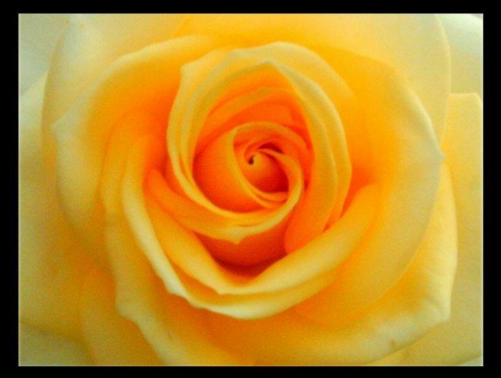 Il cuore della rosa di fabiana74