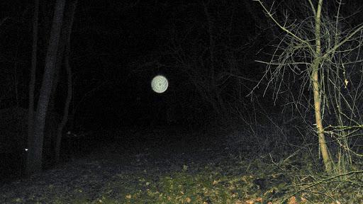 candelilla-bosque-orbes-aparecen-noche