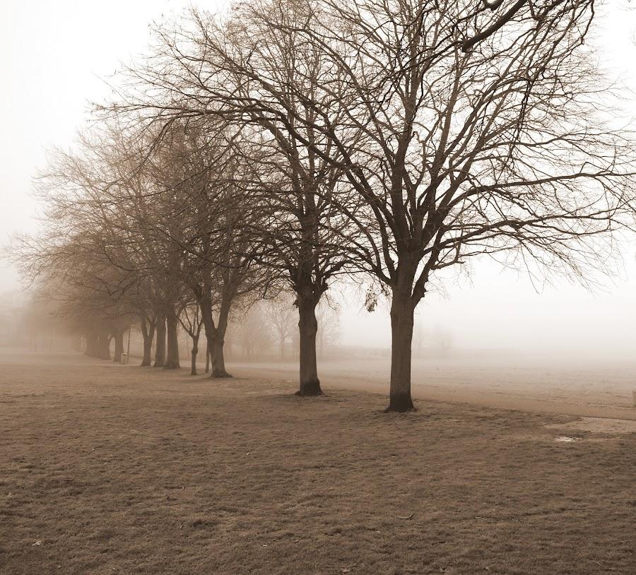 by Stacy John - Novices Only Landscapes
