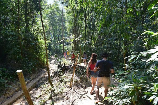 Trek through the lush green rain forest