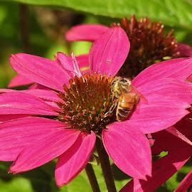 by Gerard Hildebrandt - Flowers Flower Buds (  )