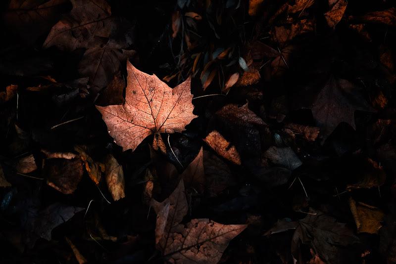 Tonalità d'autunno di Donatella Brusca