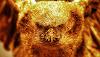 Choroy de Oro - Leyenda chilena de un pájaro con plumas de oro
