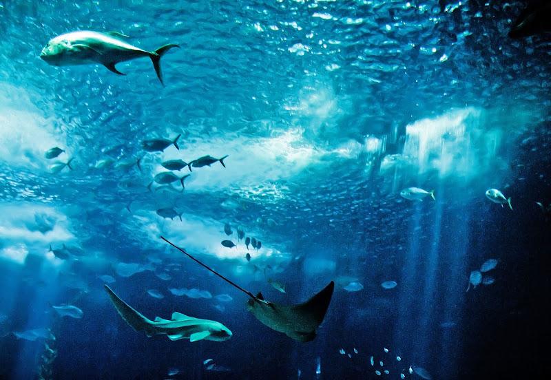 Oceano Atlantico di Patrix