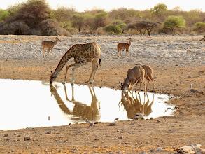 Photo: #024-Un point d'eau à Etosha