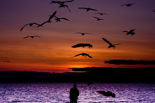 Victoria-BC-ocean-scene.jpg - Take time to enjoy the stunning sunsets in Victoria, British Columbia.
