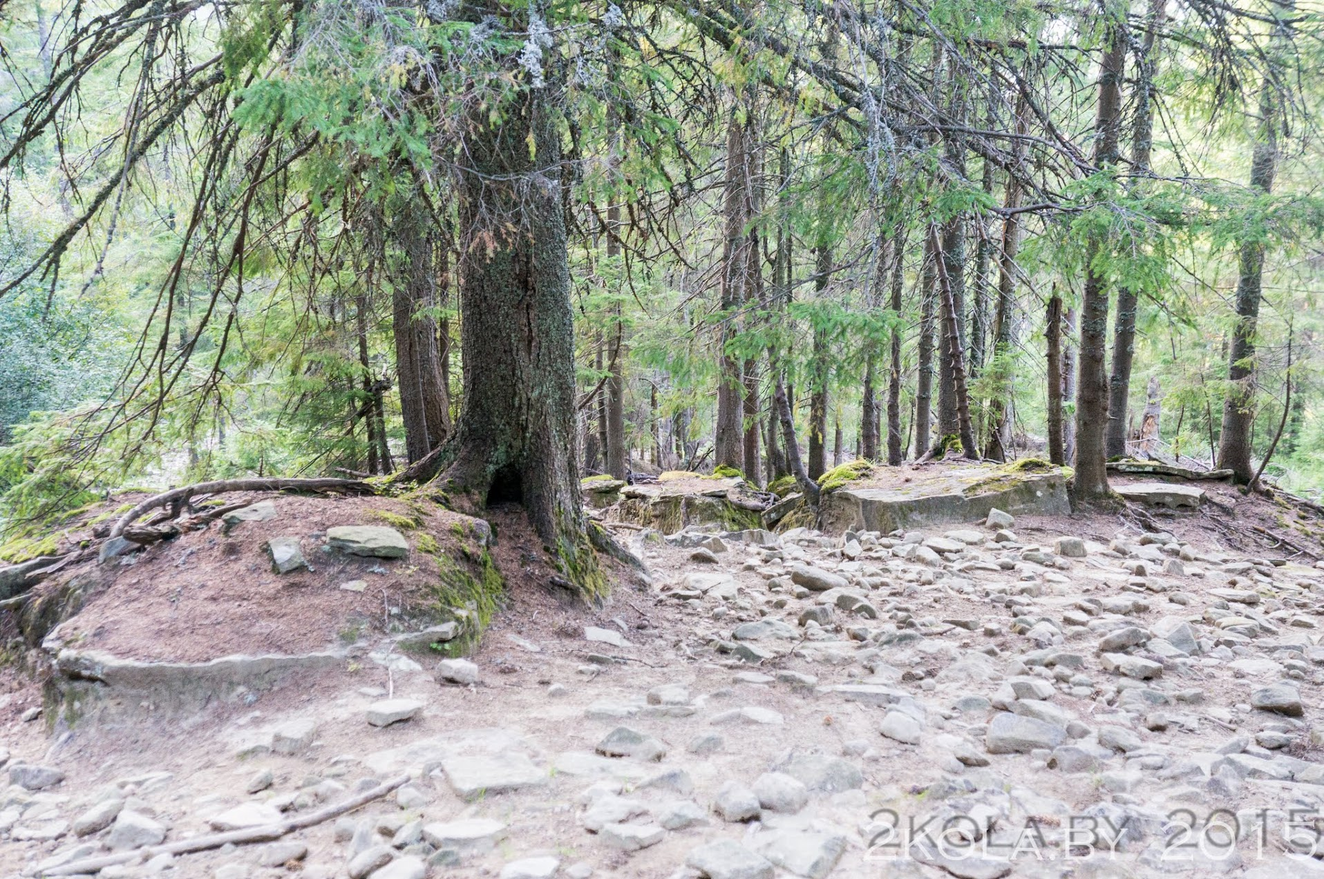 дорога в карпатском лесу