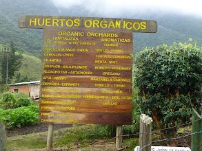 Photo: An organic orchard just above Termas Papallacta, supplying the restaurant