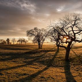 Sunrise at Herrenhof (TG) | Sonnenaufgang bei Herrenhof (TG) by Franz Engels - Landscapes Travel ( portfolio, sonnenaufgang, switzerland, bildertyp, landscape photography, schweiz, thurgau, sunrise, landscape, markantes, best pics, landschaftsfotografie, la suisse )