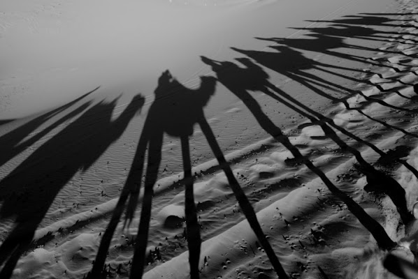Shadows of camels di flaviogallinaro
