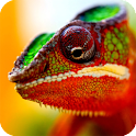Chameleon Live Wallpaper icon
