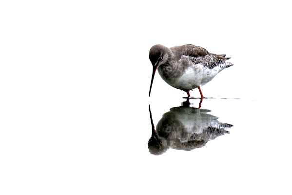 reflected bird di Ltz/rivadestra