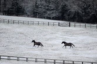 Photo: FINDON, ENGLAND - JANUARY 14: Horses gallop through a paddock after snowfall on January 14, 2013 in Findon, England. (Photo by Alan Crowhurst/Getty Images)