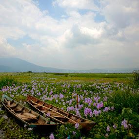 by Abah otox Baratawiria - Landscapes Prairies, Meadows & Fields