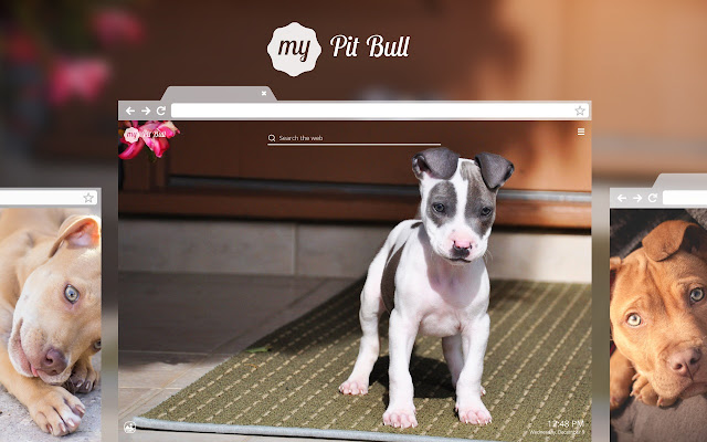 Enjoy Adorable Pitbull Puppy And Dog Wallpapers With Every New Tab
