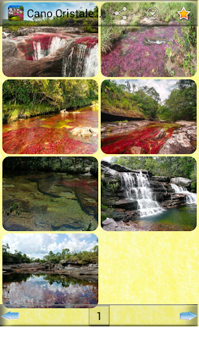 Cano Cristales Wallpapers