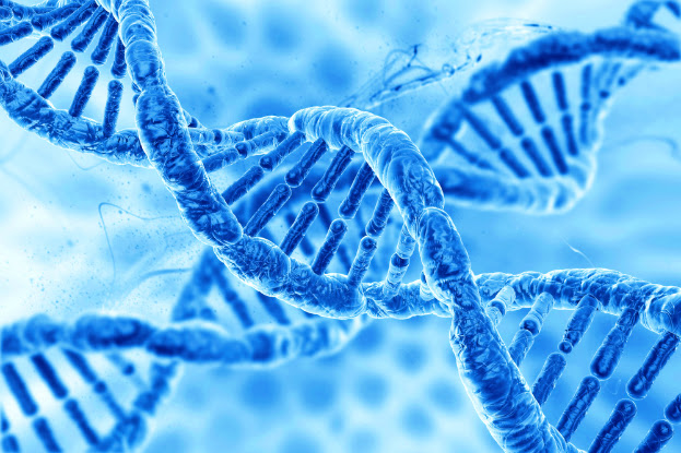 Δομή του ανθρώπινου γονιδιώματος, Structure of the human dna.