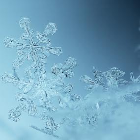 Siamese twins by Tomáš Celar - Abstract Macro ( canon, tomáš, celar, snowflake, frozen, macro, winter, cold, blue, ice, flake, snow, mp-e )
