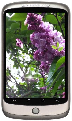 Lilacs Blossoms LWP