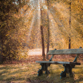 A wonderful place by Nistorescu Alexandru - City,  Street & Park  City Parks ( #bench, #autumn, #colors, #suunyday, #park,  )