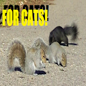 Squirrels For Cats and Dogs icon