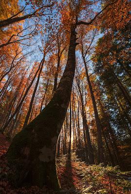 autumn colors di rik