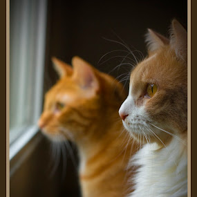 Tiger and Percy by Daisy Schlegel - Animals - Cats Portraits ( cats, cat )