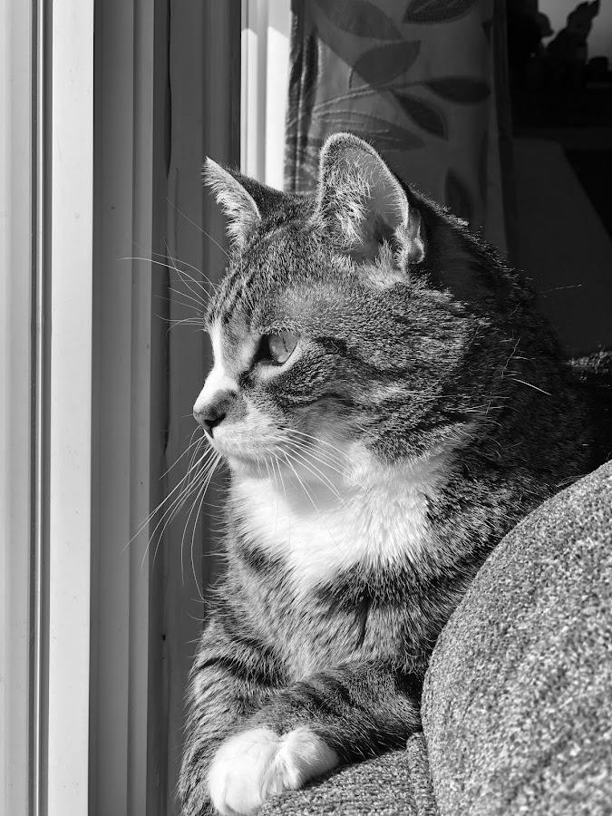 Enjoying some winter sunshine  by Tom Merring - Animals - Cats Portraits ( cat )
