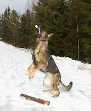 Photo: Ayla hopper etter snøball