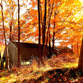fall 2018 by Martin Stepalavich - Buildings & Architecture Other Exteriors (  )