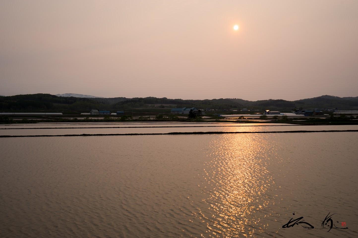 水田に煌めく黄金の夕陽