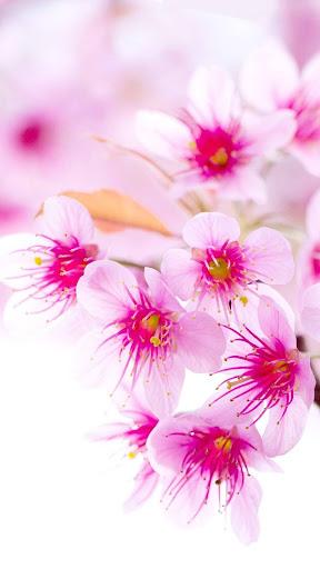 Rose Wallpaper, Floral, Flower Background: Rosely  screenshots 7