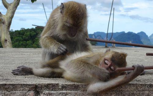Des petites singes en Thaïlande au Sony HX90V