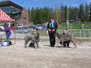 Photo: Lahti puppy show 6.5.2012, Hilla BOB-puppy, Tollo BOS-puppy