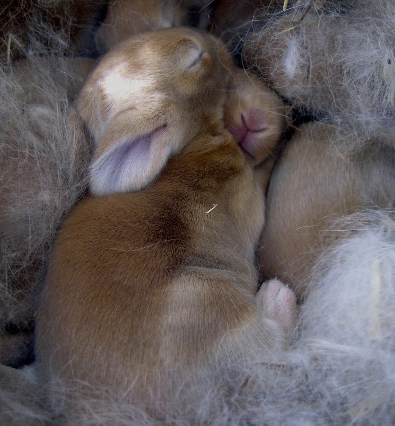 Soft Little Rabbits di Elisabetta Di Girolamo