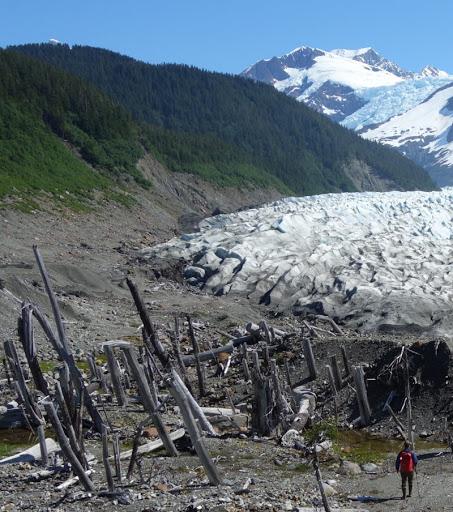 Visit to glacier begins with wildlife encounter