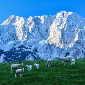 Kočna by Bojan Kolman - Landscapes Mountains & Hills (  )