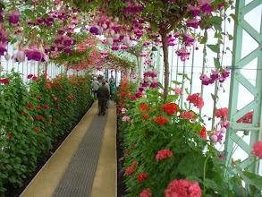 Photo: Corridoio fiorito