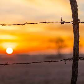 Sunset through barbed-wire by Mitch Tranmer - Landscapes Sunsets & Sunrises ( country, vibrant, sunset, rural, nebraska )
