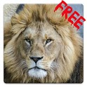 Free Lions HD Live Wallpaper icon