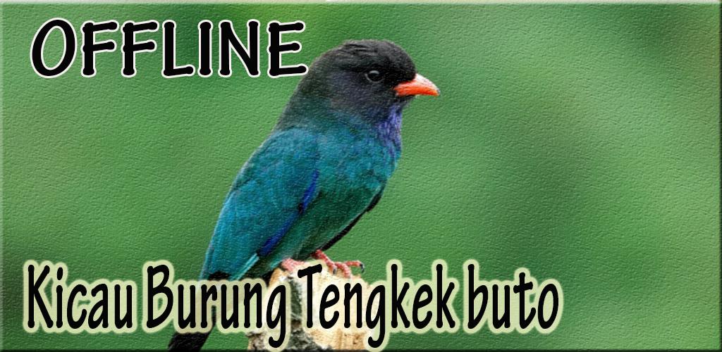 Master Burung Tengkek Buto 1 0 Apk Download Com Andromo Dev659679 App686501 Apk Free