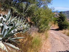Photo: Sterrate, agave ed ulivi...