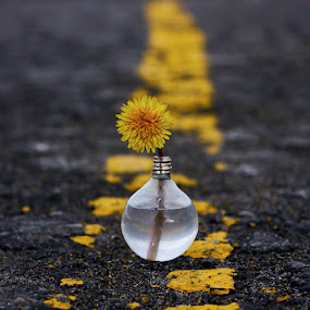 by Marianna Armata - Artistic Objects Other Objects ( water, plant, old, recycle, asphalt, lighbulb, fine art, paint, yellow, road, marianna armata, flower )