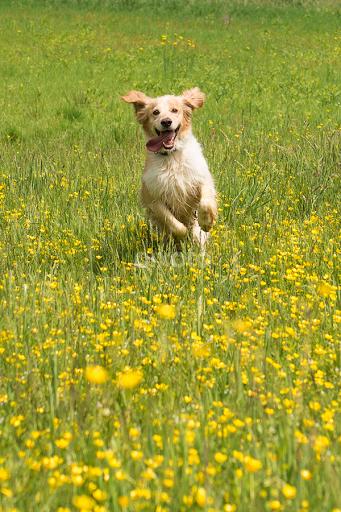 Happy Dog Running Animals Dogs Pixoto