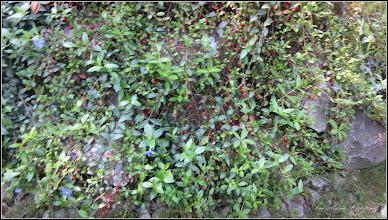 Photo: 2016.04.27 - din Piata 1 Decembrie 1918, spatiu verde